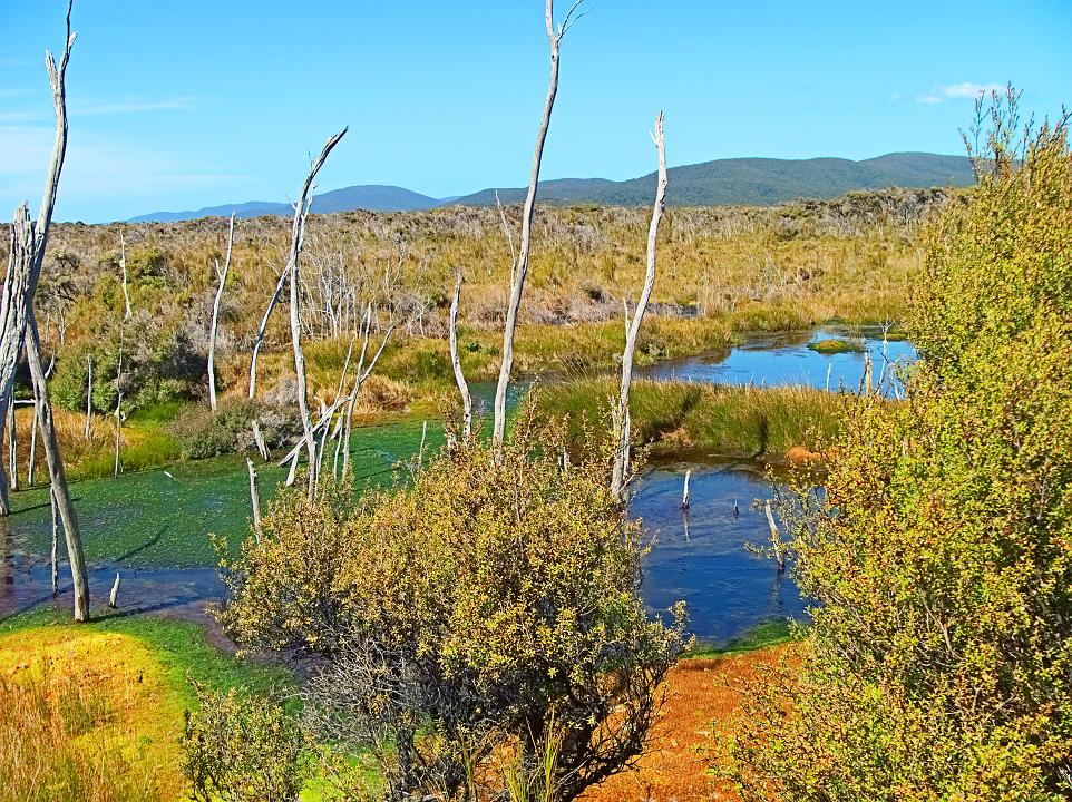 Freshwater Swamp 1