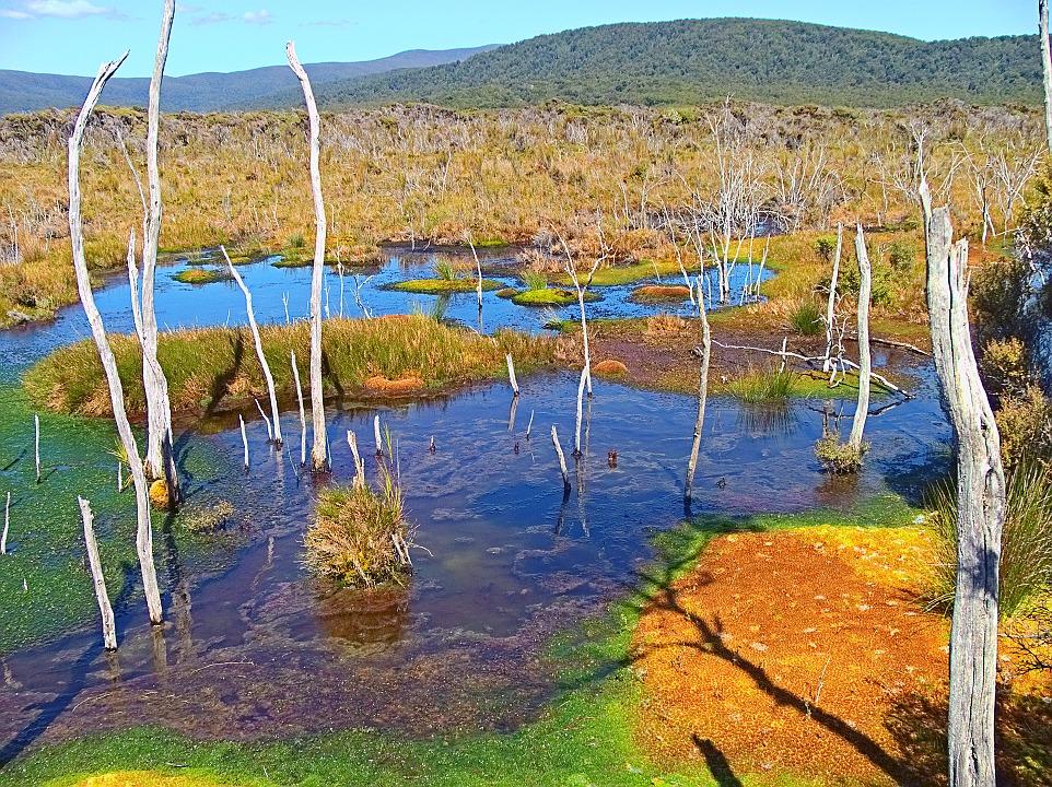Freshwater Swamp 2