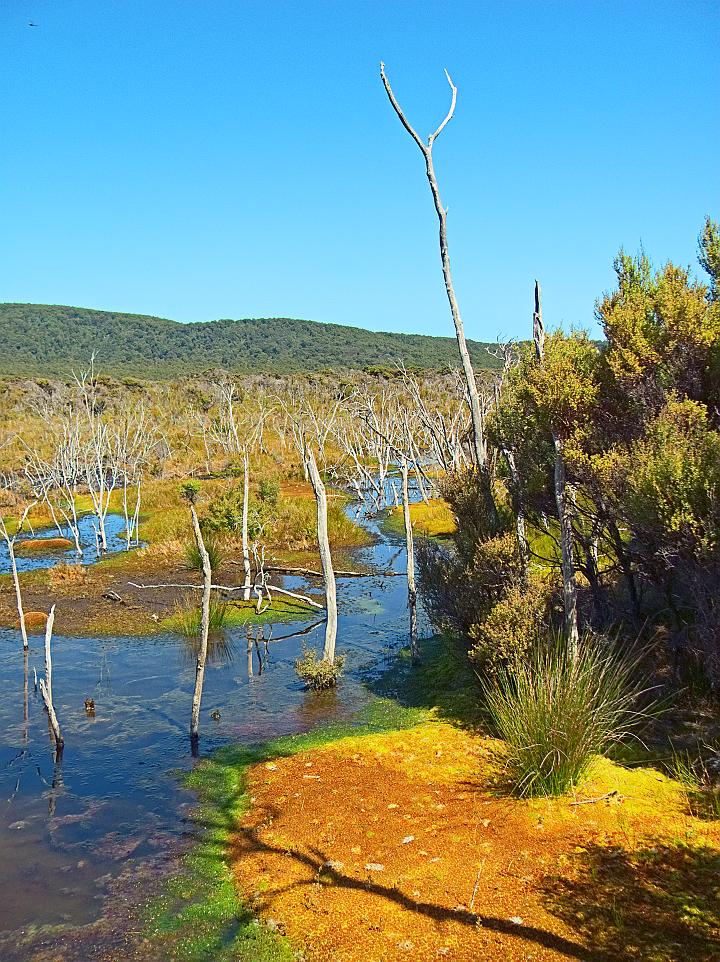 Freshwater Swamp 3