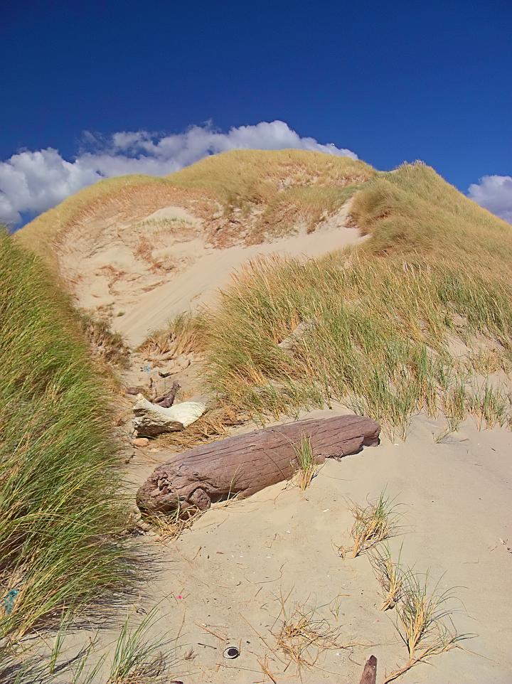 Mason Bay Dune 1