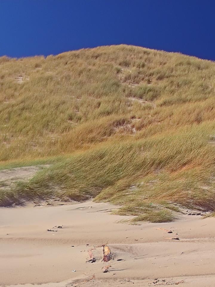 Mason Bay Dune 2