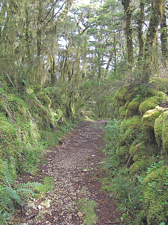 Through the Limestone Forest